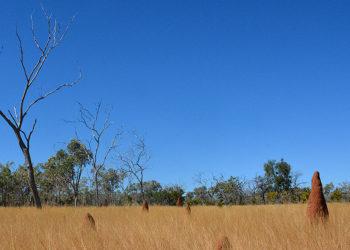 savannah outback